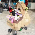 chihuahua hoarder