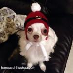 chihuahua in santa hat