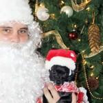 chihuahau and santa