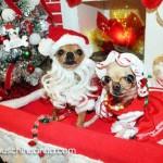 chihuahua santa and mrs clause