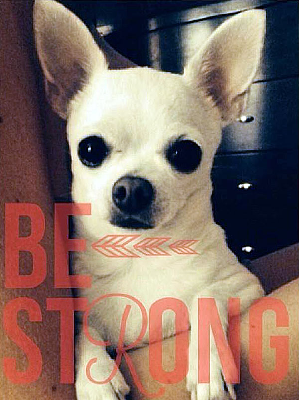 chihuahua with cancer