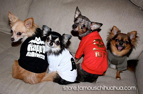 halloween dog t-shirts