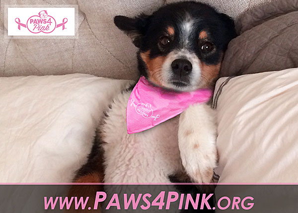 paws for pink breast cancer challenge