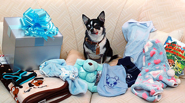 chihuahua gifts