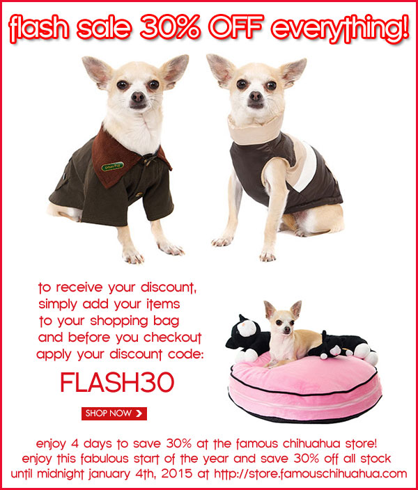 30% off chihuahua store