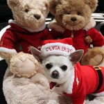 santa clause chihuahua dog