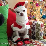 chihuahua dressed as santa