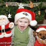 cute boy and santa chihuahua