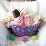 bunny chihuahua