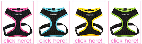 neon mesh dog harnesses