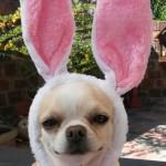 dog bunny cute