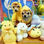 chihuahuas dressed for easter