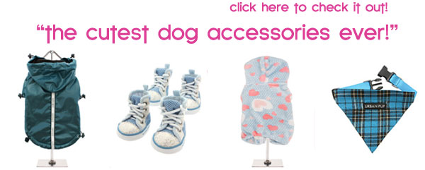 cute dog accessories