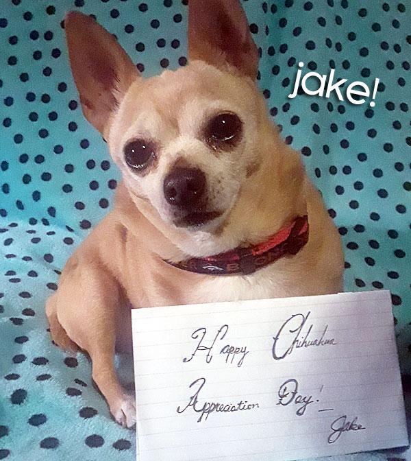 happy international chihuahua appreciation day