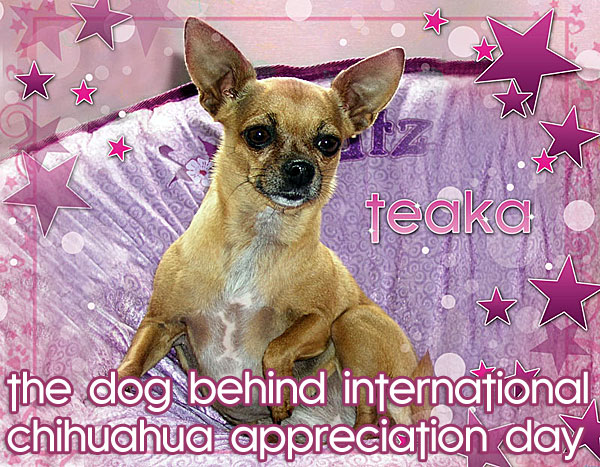 teaka, the dog behind interntional chihuahua appreciation day