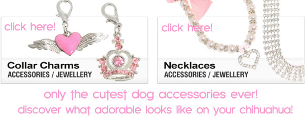 affordable dog accessories