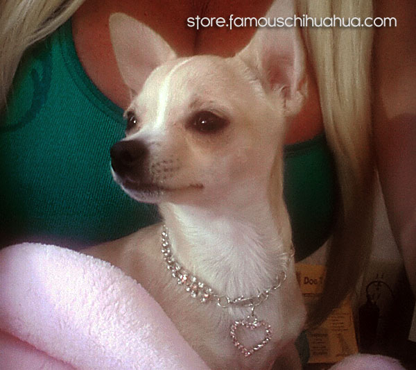 heart dog necklace