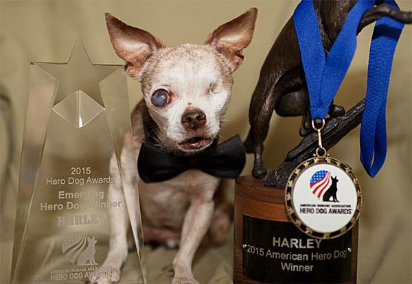harley 2015 hero dog award winner