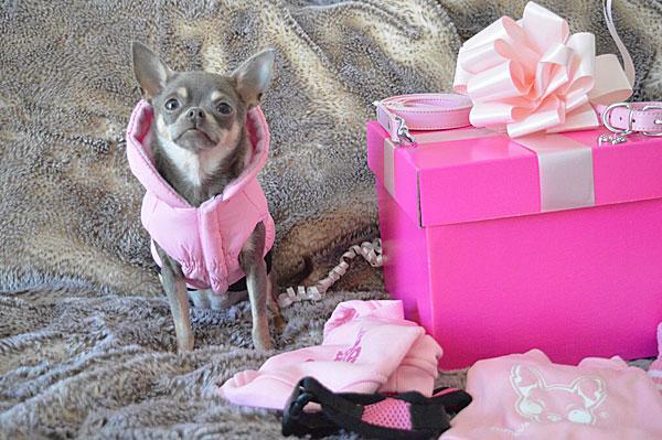 chihuahua pink dog coat