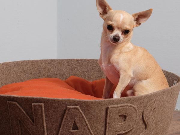 naps chihuahua dogbed
