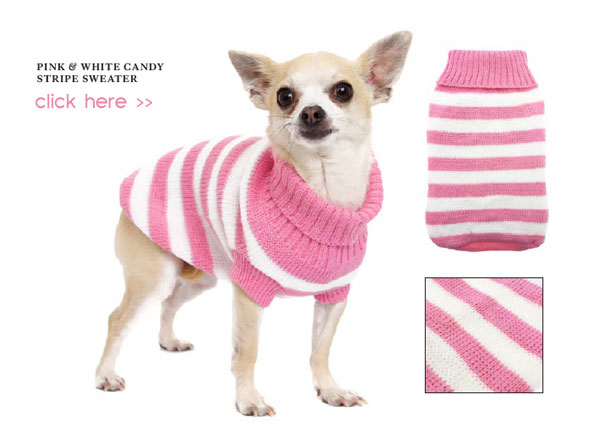pink and white candy stripe chihuahua dog sweater