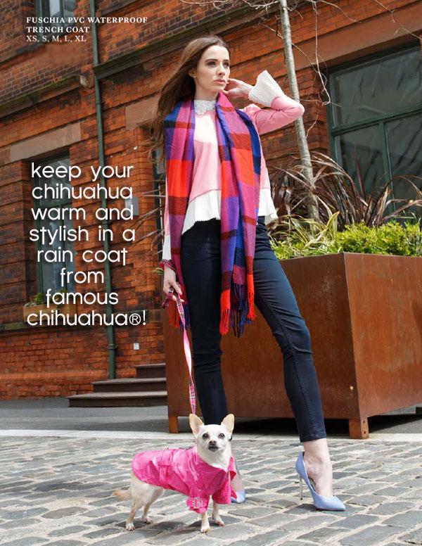 stylish chihuahua raincoats