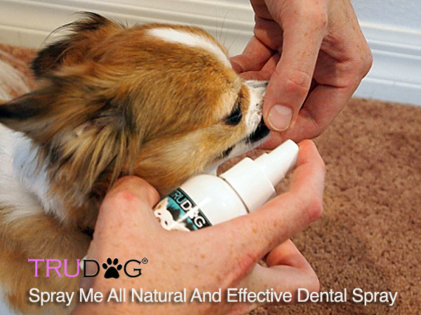 natural dog dental spray