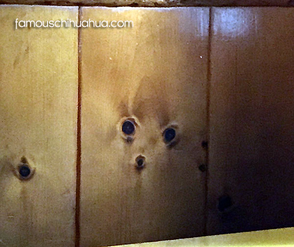 chihuahua face in wood