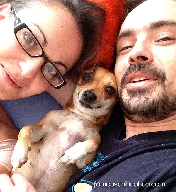 chihuahua couple selfie