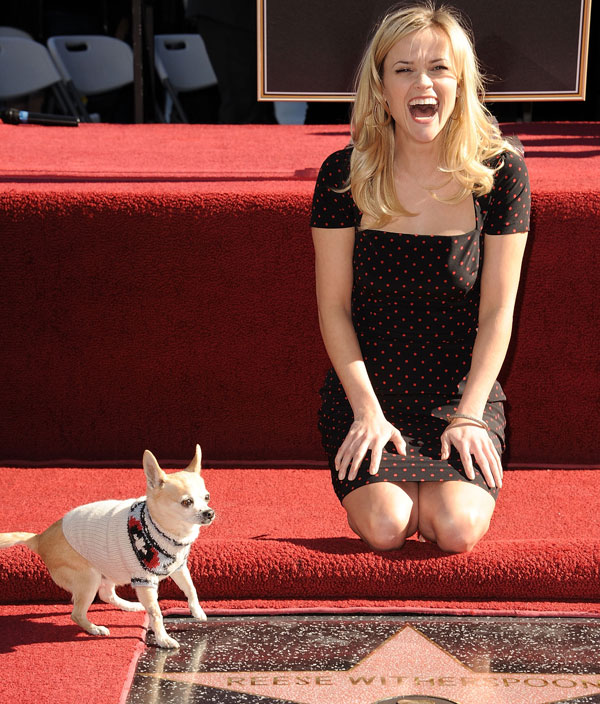 reese witherspoon chihuahua walk of fame