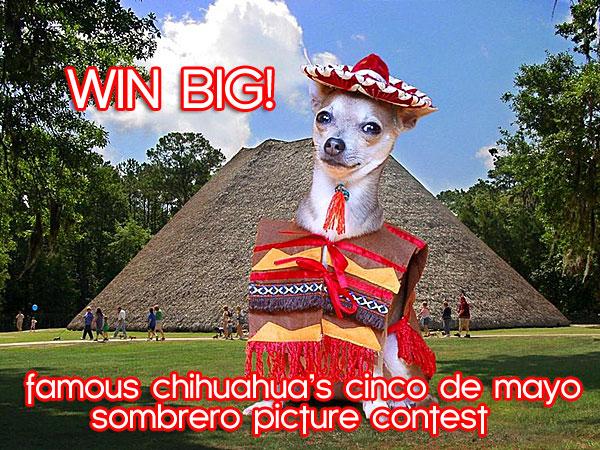 chihuhua sombrero contest