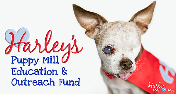harley's puppy mill education and outreach fund