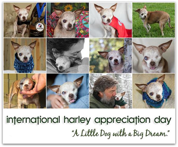 intl-harley-appreciation-day