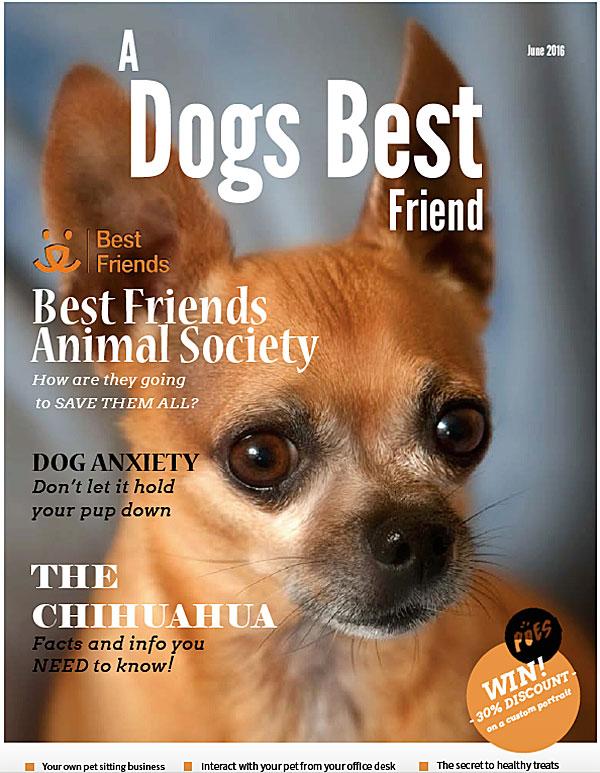 a dogs best friend magazine