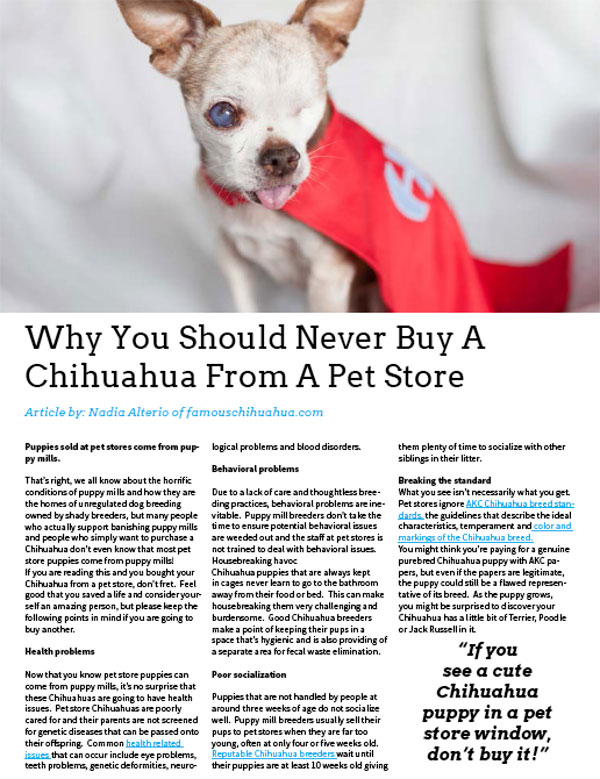 never buy chihuahua from pet store