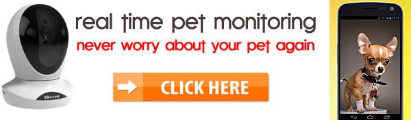 petcam pet monitor vimtag