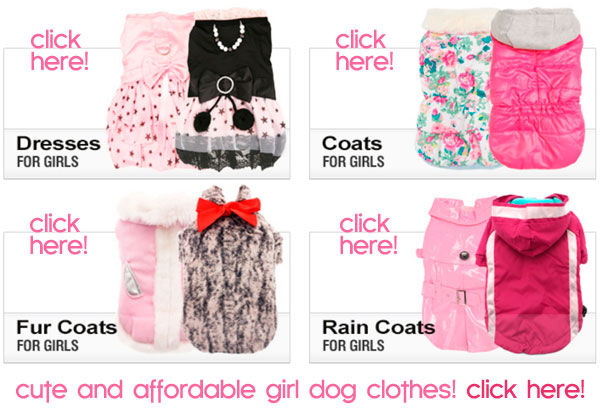 cute and affordable girl dog clothes!