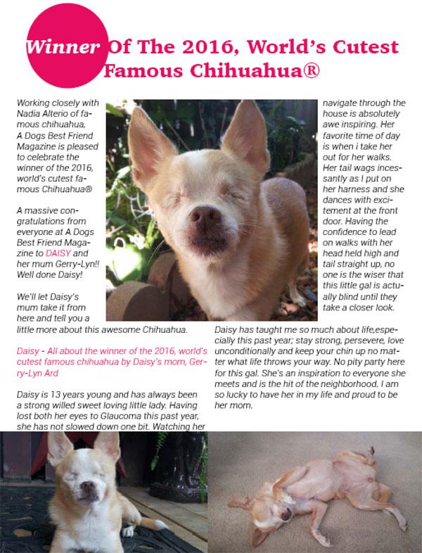 world's cutest famous chihuahua magazine