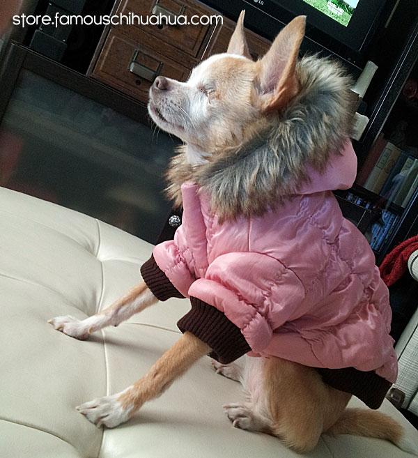 daisy-pink-jacket