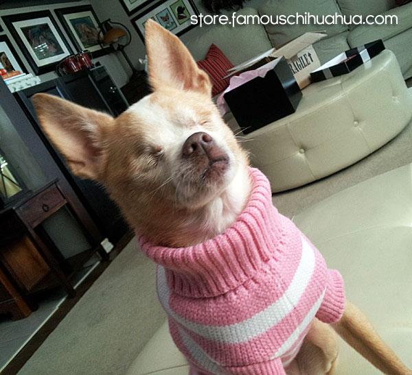 daisy-pink-sweater
