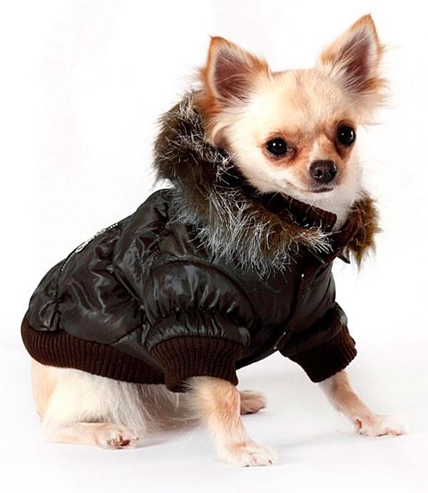 chihuahua dog parkas coats