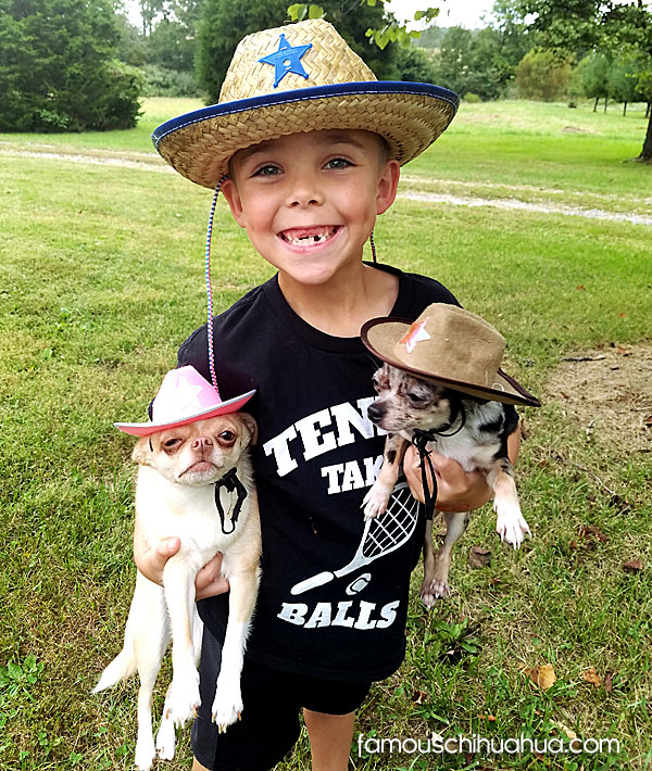boy with chihuahuas