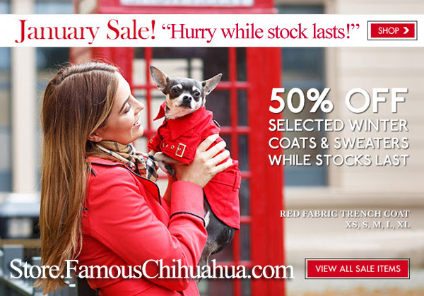 50% OFF chihuahua coats sweaters collars