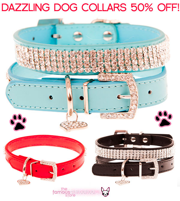 dog collars sale half price
