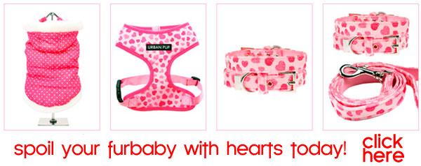hearts dog clothes