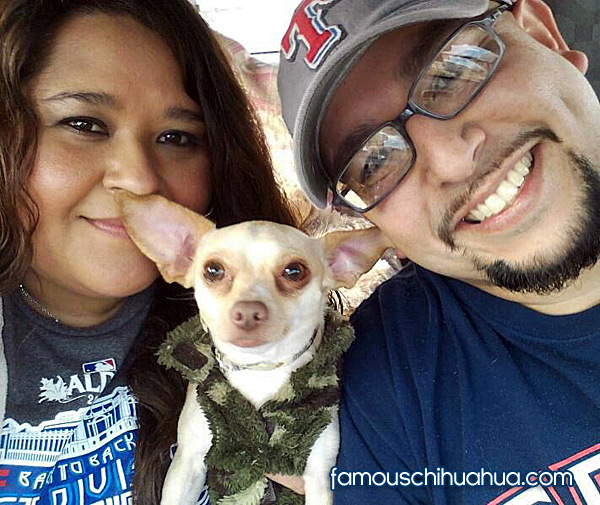 chihuahua selfie picture contest winners