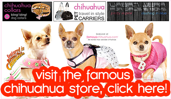 chihuahua clothing and accessories store