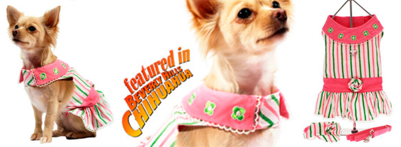chloe's beverly hills chihuahua the movie dress set!