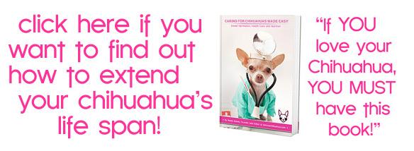 chihuahua health guide