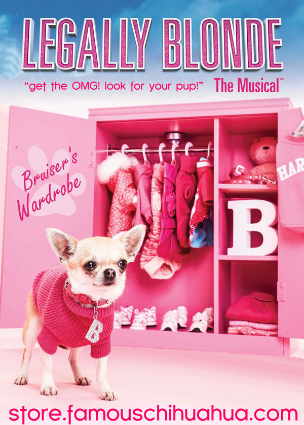legally blonde the musical dog clothes